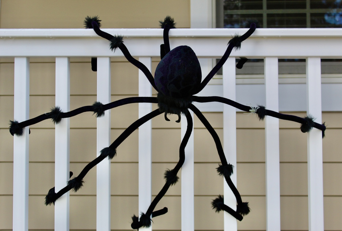 Halloween this year will be tricky, but there will be plenty of treats to find